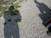 2008-09-13-0017.jpg (Fotorob) Tags: lichtschaduw engeland cornwall england margit rob perranuthnoe