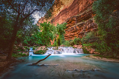 Instantly made us feel at home (ScorpioOnSUP) Tags: arizona grandcanyon grandcanyonnationalpark havasucreek havasupai supai adventure beautiful camping canyon canyonwalls cascades creek exploration hiking landscape landscapephotography nationalpark nature outdoors rapid rockformations rocks stream water waterfalls wilderness