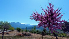 (aliciap.clausell) Tags: granada andalucia sierranevada paisaje landscape spring abril primavera relax arbol nature naturaleza españa arboles trees