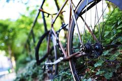Park Bike (Dusty J) Tags: paris france europe nikon d750 nikkor vacation art light dustin gaffk gaffke dustingaffke dustyj bike bicycle bikes street velo bici