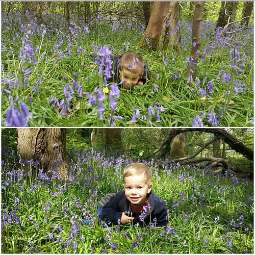 Some things don't change! Playing in the woods on Friday and 3 years ago :-) #Bluebells #FunInTheWoods #ImHiding