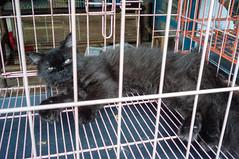(kuuan) Tags: cat indonesia cage jogja mf yogyakarta yogya manualfocus voigtlnder 25mm skopar birdmarket f425mm voigtlndersnapshotskoparf425mm