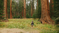 Sequoias (BurlapZack) Tags: widescreen 16x9 169 canoneos5dmarkii flashback vscofilm reedits archives vacation redwoods forest redwoodsnationalforest sanfranciscoca california roadtrip familyvacation 2009 canonef24105mmf4lisusm zoomlens kitzoom woods giants scale humanperspective forestfloor feelingsmall cattails silence quiet hugetrees sequoias giantsequoias grove campvibes