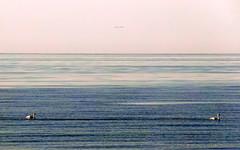 baltic swans symmetry (kexi) Tags: blue sea 2 wallpaper two sky water birds couple pair horizon samsung b