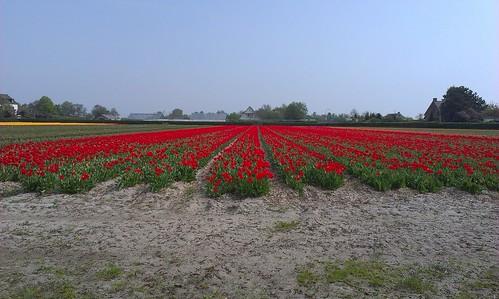 Bollenvelden bij Wassenaar. Maar even een paar plaatjes geschoten toen ik de pijlen van de Geestgrondentocht ging ophalen.