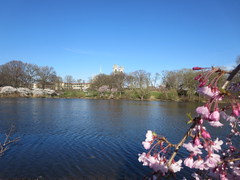 Cherry Blossoms hanging over the lake at the  Essex County Cherry Blossom Festival Branch Book Park, in Newark, New Jersey USA (RYANISLAND) Tags: park new pink flowers trees flower tree japan cherry outdoors japanese newjersey spring cherries blossom essexcounty blossoms nj jersey cherryblossom cherryblossoms newark essex springtime citypark yoshino cherrys floweringtree floweringtrees cherryblossomfestival colorpink newarknewjersey newarknj pinkcolor