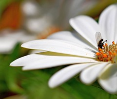 tuffo nella pappa!!! (serfavil) Tags: greatphotographers nikond60 macromarvels simplysuperb macroflowerlovers superbmacroflowers nikonflickraward macroenaturaripresadavicino
