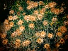 yellow_green (netman007 (Andre` Cutajar)) Tags: flowers sky sun nature chapel malta andre quotes gozo mediterrean cutajar commino