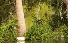 Ausflug in die kleinen Backwaters.