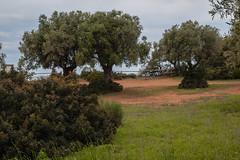 uccellina-6 (mauro.fi) Tags: verde alberi nikon campagna acqua paesaggio parcodelluccellina contrasto alberese nikonclubit