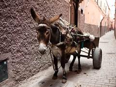 Baudet dans les ruelles de Marrakech (Dahrth) Tags: donkey burro morocco maroc marrakech ne gf1 lumix20mm 20mmpancake gf120
