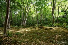 20140518-067-Moss garden of Gio-ji temple.jpg (Roger T Wong) Tags: travel green japan garden temple moss kyoto arashiyama 2014 canon24105f4lis canonef24105mmf4lisusm gioji sonyalpha7 sonya7 rogertwong