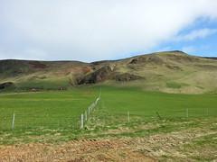 Blir handsvettig bara jag tnker p att jag gick ner fr den dr sidan berget (frettir) Tags: island iceland reynisfjall