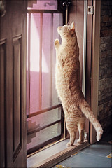 (K. Sawyer Photography) Tags: door animal cat screen