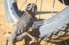 How to climb wheel spokes (2/3) (jbdodane) Tags: africa animal bicycle chameleon cycletouring cycling cyclotourisme day579 dorobnationalpark namaquachameleon namibia saltroad skeletoncoast velo wheel freewheelycom jbcyclingafrica