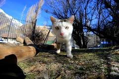 gato (pcarsandov) Tags: chile animal del nieve paisaje gato aire libre mascota cajon cordillera maipo volcanes baos morales
