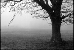 December in fog (elkarrde) Tags: morning trees winter tree film nature fog landscape blackwhite december pentax takumar kodak 28mm foggy croatia spotmatic t400cn canoscan spf twop 125asa c41 chromogenic colornegative vuescan 8800f pullprocess lens:mount=m42 film:brand=kodak film:format=135 kodakprofessionalt400cn canoncanoscan8800f location:country=croatia lens:focallength=28 spotmaticspf supermulticoatedtakumar13528 film:process=c41 lens:focallength=28mm film:speed=400 lens:brand=asahipentax winter2013 desinec honeywellpentaxspotmaticspf camera:brand=asahipentax camera:mount=m42 lens:maxaperture=35 camera:model=spotmaticspf film:model=t400cn lens:model=3528 camera:brand=honeywellpentax camera:name=spotmaticspf camera:format=135 lens:brand=asahipentaxtakumar lens:name=supermulticoatedtakumar lens:format=135 film:ei=125 lens:brand=supermulticoatedtakumar