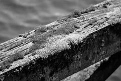 Mossy (Minolta 505si, AgfaPhoto APX 100) (baumbaTz) Tags: bridge blackandwhite bw slr film water monochrome analog river germany deutschland iso100 blackwhite moss wasser minolta atl ishootfilm 150 m42 scanned apx100 april epson sw analogue dynax monochrom grayscale pentacon agfa rodinal schwarzweiss brücke fluss apx analogphotography moos 505 2200 greyscale 2014 oste 200mm niedersachsen lowersaxony filmphotography jobo fpp ilovefilm v500 505si adox adonal filmisnotdead autolab vuescan analoguephotography agfaphoto bremervörde minoltadynax505sisuper istillshootfilm bremervoerde filmforever pentacon200mm epsonv500 agfaphotoapx100 adoxadonal filmphotographyproject adofix believeinfilm blackandwhiteology joboautolabatl2200 20140419