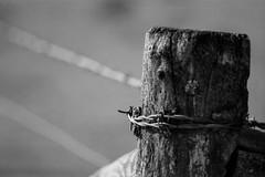 Fencepost (Minolta 505si, AgfaPhoto APX 100) (baumbaTz) Tags: blackandwhite bw slr film monochrome analog fence germany deutschland iso100 blackwhite post minolta atl fences ishootfilm 150 m42 scanned apx100 april epson sw analogue dynax monochrom grayscale pentacon agfa rodinal schwarzweiss zaun apx analogphotography 505 2200 greyscale fencepost 2014 200mm niedersachsen lowersaxony filmphotography jobo fpp zäune pfahl ilovefilm v500 zaunpfahl 505si adox adonal filmisnotdead autolab vuescan analoguephotography agfaphoto bremervörde minoltadynax505sisuper zaeune istillshootfilm bremervoerde filmforever pentacon200mm epsonv500 agfaphotoapx100 adoxadonal filmphotographyproject adofix believeinfilm blackandwhiteology joboautolabatl2200 20140419