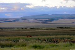 Malhuer Natioanl Wildlife Refuge (spollock61) Tags: nature grass oregon nikon scenery wildlife deer thegreatnorthwest steensmountains southeastoregon malhuernationalwildliferefuge nikond5200