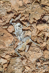 Death in the Desert (Squirrel Girl cbk) Tags: usa newmexico expedition water june dead desert skin science frog springs bones geology nm zia exploration travertine microbiology deadfrog squirrelgirl barbaraamende barbaraaamende barbaraanneamende penascosprings peñascosprings