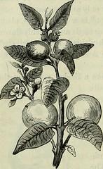 Anglų lietuvių žodynas. Žodis acidulous reiškia a rūgštokas lietuviškai.