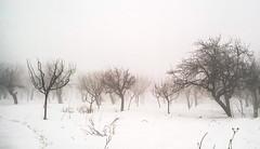 Snow (Mehreen Alam) Tags: kashmir india nature photography winter snow