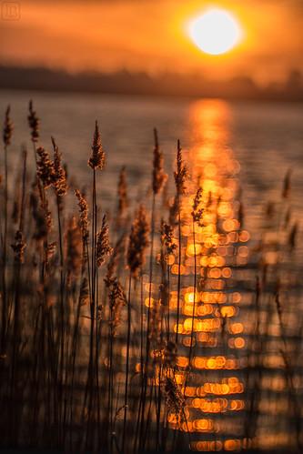 bokeh @the lake