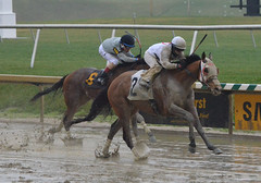 "2017-03-31 (21) r3 Horacio Karamanos on #2 Mid Ocean (JLeeFleenor) Tags: photos photography md maryland marylandracing marylandhorseracing laurelpark horseracing jockey جُوكِي ""赛马骑师"" jinete ""競馬騎手"" dżokej jocheu คนขี่ม้าแข่ง jóquei žokej kilparatsastaja rennreiter fantino ""경마 기수"" жокей jokey người horses thoroughbreds equine equestrian cheval cavalo cavallo cavall caballo pferd paard perd hevonen hest hestur cal kon konj beygir capall ceffyl cuddy yarraman faras alogo soos kuda uma pfeerd koin حصان кон 马 häst άλογο סוס घोड़ा 馬 koń лошадь"