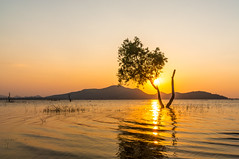 tree in water with mountain background at Bang Phra Reservoir Sr (phollapat) Tags: bangphra chonburi sriracha blue cloud coast landscape nature red reservoir scenic sky sunset thailand tree water wave yellow