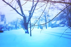 snow day II (magic-spelldust) Tags: snow nature winter branches white blue pastel cold seasons