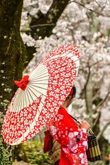 Kyoto - Path of Philosophy - 01 (coopertje) Tags: japan kyoto pathofphylosophy phylosophy kimono geisha umbrella parasol red cherryblossom sakura