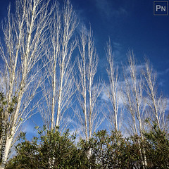 Naked trees over cloudy sky (Pedro Nogueira Photography) Tags: pedronogueira pedronogueiraphotography photography iphoneography outdoor portugal tree clouds cloudy sky nature blue white