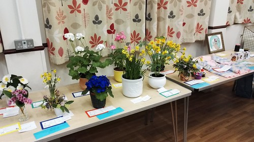 Increase of entries at Bournemouth in Blooms recent Horticultural Meeting