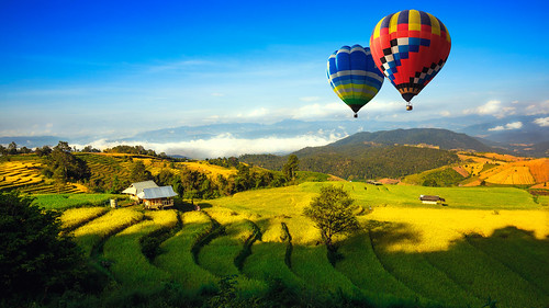 Colorful hot-air balloons flying over the doi Inthanon national park with sunrise and morning.