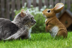 Everybody needs some bunny (FocusPocus Photography) Tags: fynn fynnegan katze kater cat chat gato tier animal osterhase easter bunny hare rabbit gras grass garten garden