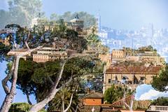 Rome, your trees. (Timm Ziegenthaler) Tags: roma rome rom destination wedding travelphotography reisefotografie reisefoto romfoto