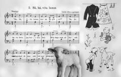 Bahh Bahh white lamb. For my album Creativity, close-up and macro (andantheandanthe) Tags: photofun fun creativity closeup close macro imagine imagination fantasy inspiration vision imagitivness creativ piano sheet music notes lamb