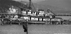 2008-02-23 Abandoned Tugboat Enchantress (B&W) (1024x500) (-jon) Tags: anacortes fidalgoisland sanjuanislands skagitcounty skagit washingtonstate washington salishsea fidalgobay tug tugboat ship boat vessel enchantress mikiclass lt495 usarmy abandoned derelict sunk bw blackandwhite a266122photographyproduction