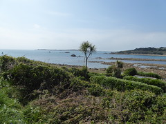 18 April 2017 Scilly (38) (togetherthroughlife) Tags: 2017 april scilly islesofscilly