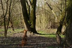 Waiting (yve_all) Tags: dog hund natur nature landschaft landscape licht light colours farben blickwinkel view rheinvorland bäume trees