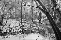 OMFD Snow & Ice Storm 2924 (dweible1109) Tags: snowscape omfd outmyfrontdoor 1024mmnikkor penna nikon d5100 cold winter trees rocks
