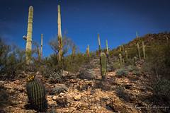 Full Moon - Saguaro Cactus landscape (Turk Images) Tags: fullmoon nightexposure saguaronationalparktucsonmountaindistrict timeexposure arizona cactus desert landscape nightscape tucson winter