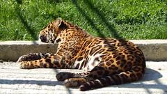 At the zoo (I) (fmihayi) Tags: zoo animals nature wild wildness