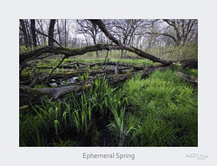 Ephemeral Spring (baldwinm16) Tags: april dupagecounty forestpreserve il illinois midwest nature season spring springgreen woodland woods natureofthingsphotography