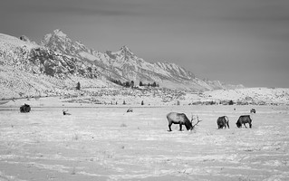 Grand Teton and the National Elk Refuge, Wyoming