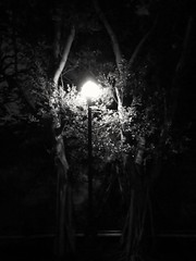 Street Light (The Sense Series) By Sony Xperia XA #nights #tree #streetlights #street #glow #dark #vibes #vibe #sense #feelings #feel #mono #monochrome #blackandwhite #blackart #black #simple #city #urban #corner #sonyxperia #sonyphotography #sony #xperia (gxzkarl) Tags: blackandwhite mobilephotography monochrome city black feelings sonyphotography vibes corner glow lowlights lowlight dark simple sense sonyxperia nights streetlights mono xperiaphotography blackart xperia urban vibe street tree feel sony