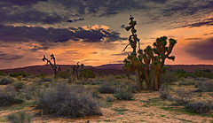 Western Scape (Rennett Stowe) Tags: copper coppersky joshuatrees joshuatree desert desertsouthwest desertbeauty desertflora death california creativecommons californiadesert canoneos5dmarkiii unitedstates unitedstatesofamerica antelopevalley america antelopevalleycalifornia lancastercalifornia lancaster pretty peaceful dystopia dystopian nuclearwinter climatechange environmentalchange environmentallaw orange ominous foreboding despair sense sensual forest summer spring darknight zombie zombiesky darkness spirit spiritual god goldenlight goldensunset sunrise sunset desertsunset deserttrees rising liberty losangeles tired dreaming dreamscape triump enter separation lonely love canonlenses canon lighttechnique iso pi woman travel oldwest wildwest wildbillhickok magiclight dre japan ngc