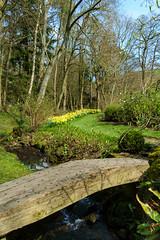_DSF6648.jpg (douglasjarvis995) Tags: bridge gardens stream water flowers plant path track yorkshire walk fuji xpro1 18mm parcevallhallgardens
