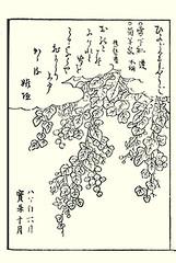 Lyreleaf nightshade (Japanese Flower and Bird Art) Tags: flower lyreleaf nightshade solanum lyratum solanaceae shunsen ooka kano woodblock picture book japan japanese art readercollection